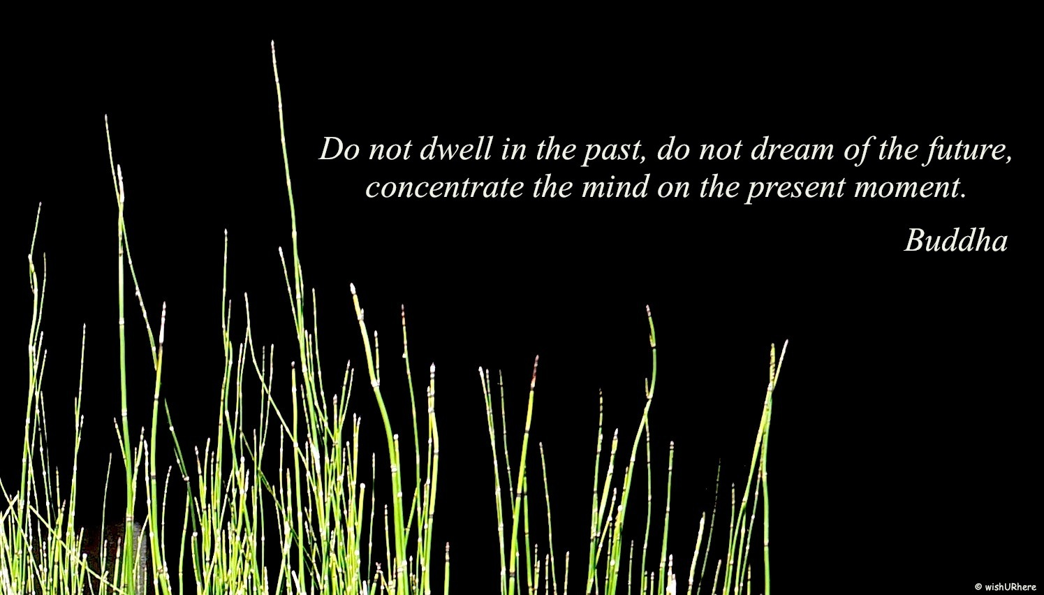 Quote Buddha Pastpresentfuture Wishurhere
