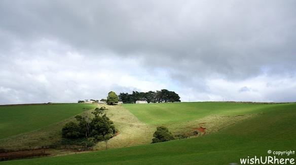Tasmanian Meadow