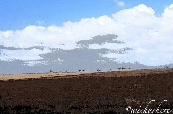 South Australia Landscape