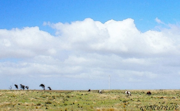 South Australia Pasture