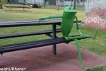 Balranald Frogs