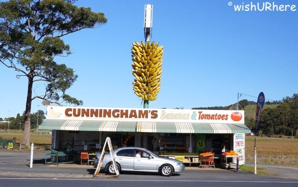 Biggest Banana Bunch