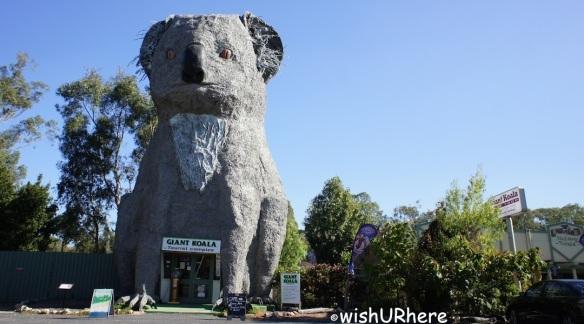 Giant Koala