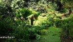 The Birmingham Botanical Gardens