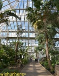 The Palm House
